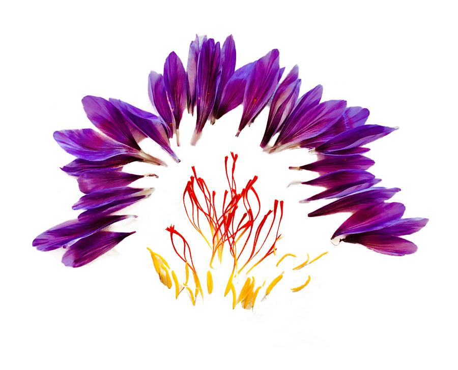 Saffraan bloem